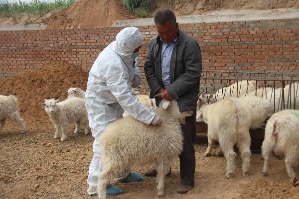 准格尔旗秋季动物防疫工作有序进行